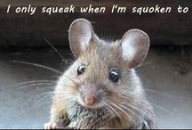 Funny Animals / Funny animal captions and memes.