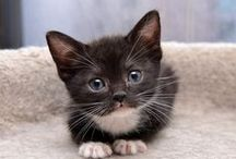 Kitty Cats / The cutest and funniest kittens/cats.