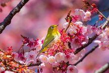 spring moods