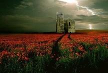 Scotland~Land of my heart