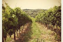 #InMontefalco - Le aziende vinicole / Le aziende che hanno accompagnato i partecipanti nella scoparta dei prodotti del territorio