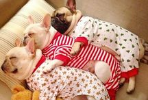 Frenchies / One day ❤️