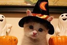 Halloween / by Louise Fletcher