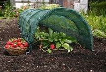 Grow Your Own / Garden Tunnels / Do you dream of biting into a perfect homegrown tomato? How about a crunchy green cucumber? What about tossing a salad from greens you grew yourself? Find all of the tools you need to grow your own vegetables from GardenWare.