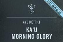 Ka'u Coffee / Marshmallow, Nougat, Vanilla-Orange / Balanced and Round