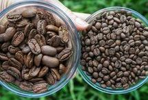 Learning About Coffee / From Peaberry to Fancy, Mokka to Maragogype, these are Hawaiian coffee beans of all shapes and sizes.