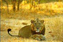 Wildlife Holiday Destinations / This board is about wildlife tours...