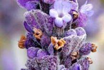 Purple / by Trivie Inc
