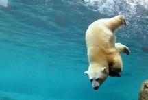Dieren en Beren / Mooie foto's van dieren. De beren zijn speciaal voor drie van onze vrienden.