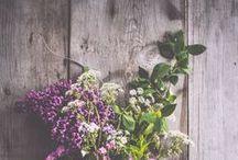 Nature || DREAMY HOME