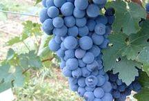 Œnotourisme en Loire Layon / La #vigne, le #vin et les #vignerons, au cœur du Loire Layon...