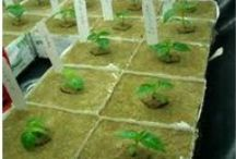 Hydroponic Farming / For Details Please visit http://www.styrouae.com/arts/