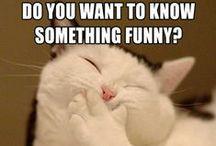 Humor / SMILE!