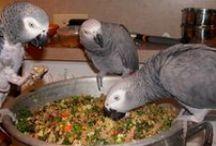 Parrots and parrot goodies / parrots, parrot food, parrot treat, parrot health, parrot toys, aviaries, pet birds
