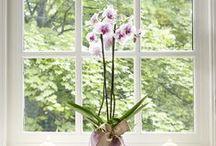 Home / Inspirational Ideas for the Home