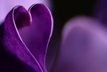 purple, purple, purple s2
