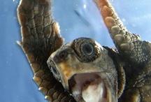 turtles <3