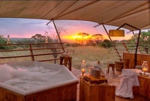 Serengeti Bushtops Camp / Serengeti Bushtops is a 5 star luxury camp located in the north western part of the Serengeti. / by Bushtops Camps