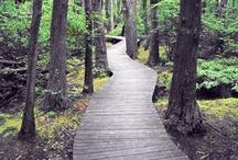 Cape Cod: Recreation
