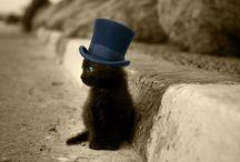 Sweety kitties