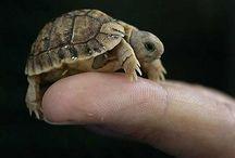 Turtlessss
