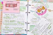studystyle / need to start studying..