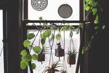 Indoor Garden / Houseplants & Interior Gardens