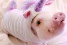 ♡ Ame-os ♡ / Não se esqueça que eles são animais!