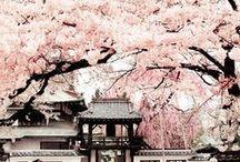 ♡ Japan ♡