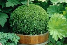 Grønne former