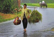 Vietnam, travel /  This board is a snap shot of a culture:  The people, the way of life ...the beauty of Vietnam. / by Hue Le