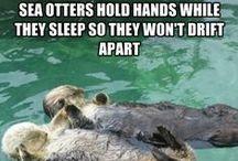 Love you like no otter