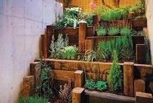 Herb Garden / by Gisele Hawkins