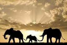 Elephants! / by Colleen Nichole