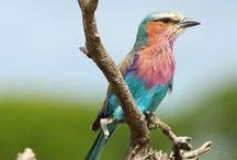 Birding Destinations