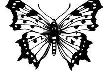 Vlinders en andere insecten