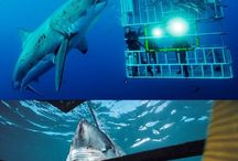 Dykning / Dykning, diving, scuba, scubadiving
