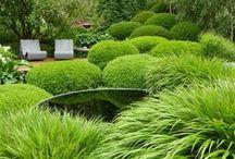 Garden /záhrada/