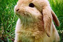 Just rabbits
