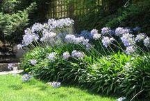 piante e giardini