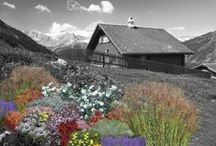 High Altitude Plants / Plants that perform well in Colorado and other high altitude locations.