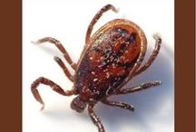 Ticks 101 / Beechmont Pet Hospital health tips about ticks and your pets. Our Cincinnati Veterinarians are Dr. Stewart Smith. Dr. Katie Larson, Dr. Meredith Ohlin-Meyer, Dr. Jennifer Millette and Dr. Lori Whitacre. / by Beechmont Pet Hospital