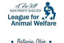 Shelters and Rescues / These are just a few of the shelters in the Cincinnati,Ohio area  for people to find their forever family member.