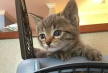 Cats and Kittens / Everything that pertains to #Cats and #Kittens  Dr. Stewart Smith, Dr. Katie Larson, Dr. Meredith Meyer, Dr. Maria Kohls, Dr.Jennifer Millette at Beechmont Pet Hospital in Cincinnati, Ohio 45230.