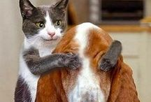 Cats and Dogs / Pins about cats and dogs