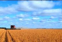 North Dakota Agriculture / North Dakota Agriculture has always been the backbone of this strong Midwestern state.
