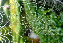 Motywy roślinne / Kompozycje roślinne, fragmenty ogrodów, makrofotografia, fotografia przyrodnicza