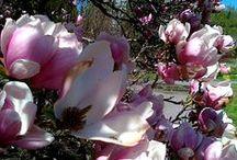 Wiosna, ach to Ty /  rośliny, ogrody, kompozycje w wiosennej odsłonie