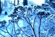 Zima - Winter / przyroda zimą