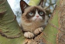 Grumpy cat / #Funny #Grumpy #Cat #Humor #Quotes #Phrases #Memes #Sayings